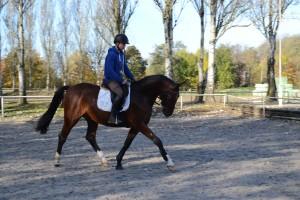 Jonge paarden 30-10-2015 035