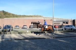 Jonge paarden 30-10-2015 036