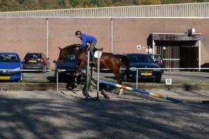 Jonge paarden 30-10-2015 039