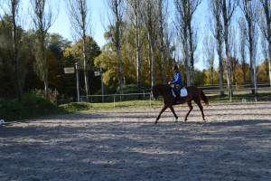Jonge paarden 30-10-2015 084